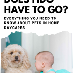 pets in daycare