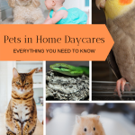 pets in home daycare
